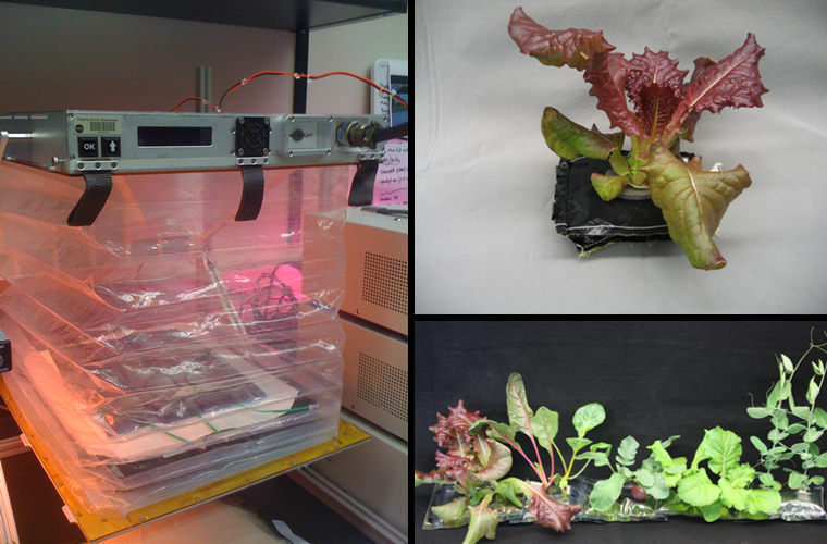 NASA Space Lettuce Project