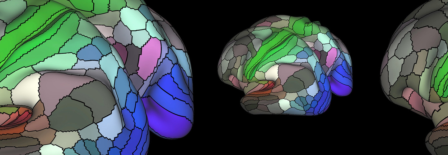 This map of the 180 areas of the human cortex was developed from research data funded by the National Institutes of Health.